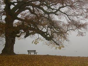 Parkbank im Nebel